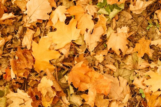 Fondo de patrón de hojas caídas. follaje amarillo en el suelo. fondo de pantalla de naturaleza otoñal.