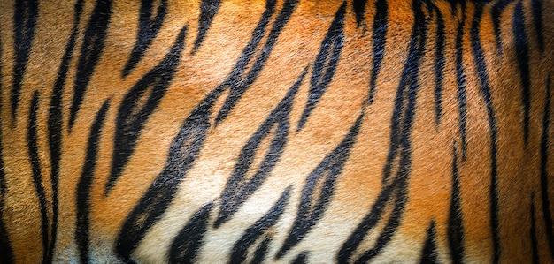 Fondo de patrón de tigre / textura real tigre negro raya naranja patrón tigre de bengala
