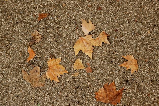 Fondo de pavimento con hojas de otoño