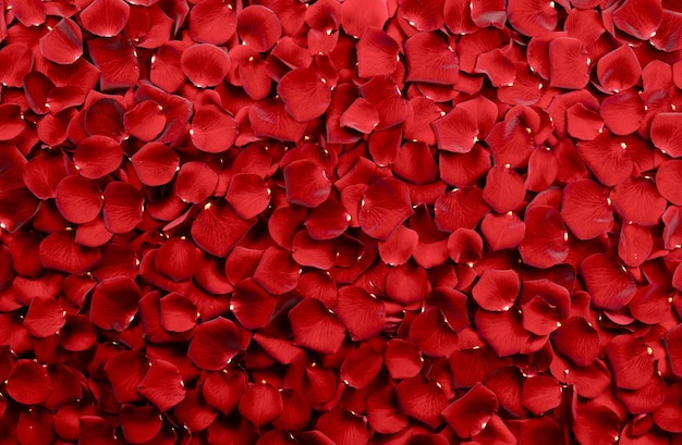 Fondo de pétalos de rosa roja