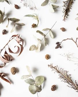 Fondo plano creativo laico plano de partes de plantas secas de invierno: aliso, helecho, eucalipto, sauce