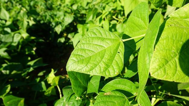 Fondo de planta verde, fondo verde brillante