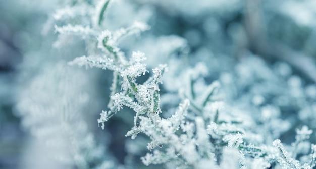 Fondo con plantas congeladas cubiertas de escarcha