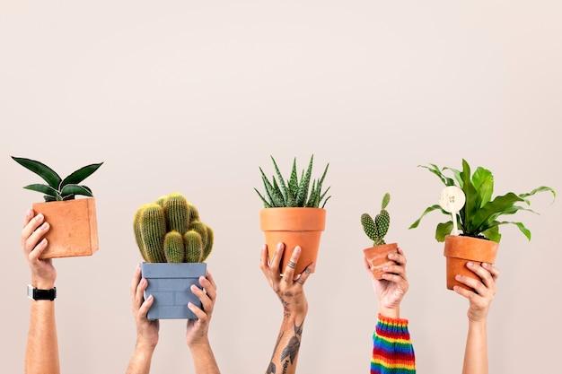 Fondo de plantas de interior para amantes de las plantas.