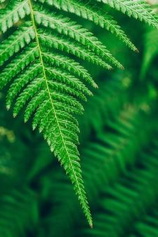 Fondo de plantas de la selva. matorrales y arbustos tropicales en la selva.