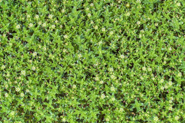Fondo de plantas verdes