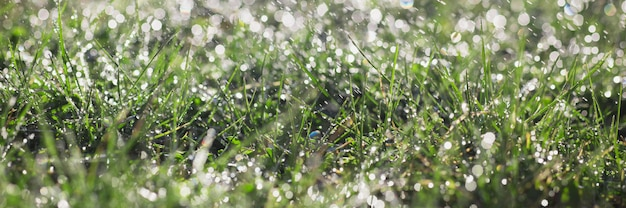 Fondo de prado verde césped en los rayos del sol naciente