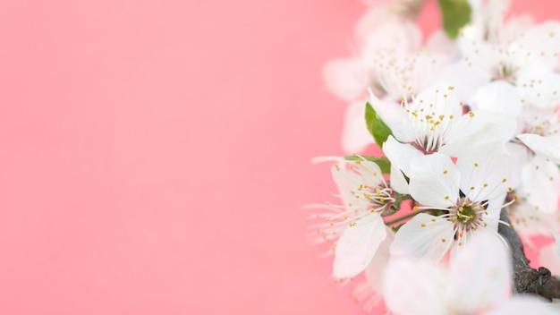 Fondo de primavera. árboles de cerezo en flor