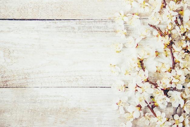 Fondo de primavera, flores y té. enfoque selectivo