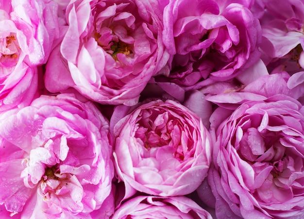 Fondo de un primer plano de rosas rosadas