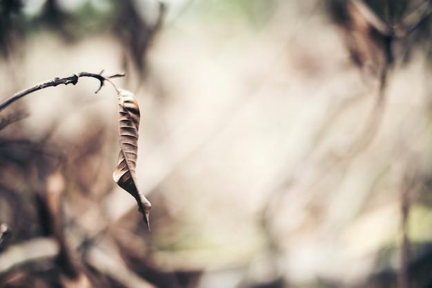 Fondo de rama de hoja seca