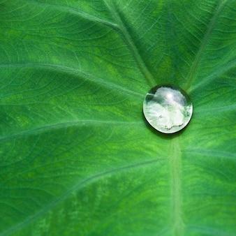 Fondo del resorte de la reflexión entorno limpio