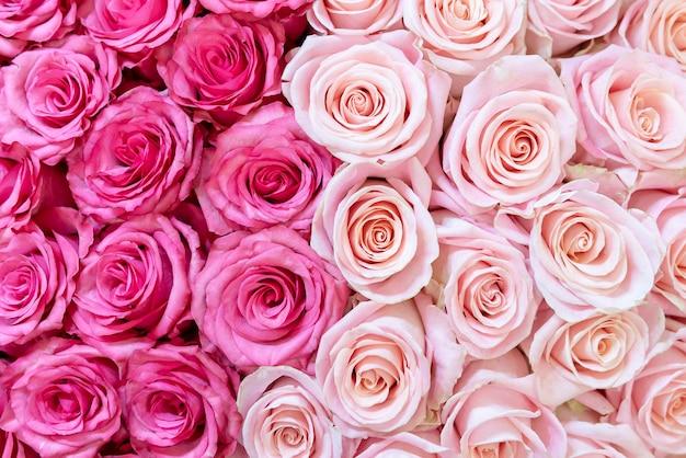 Fondo rosa y color crema de rosas.