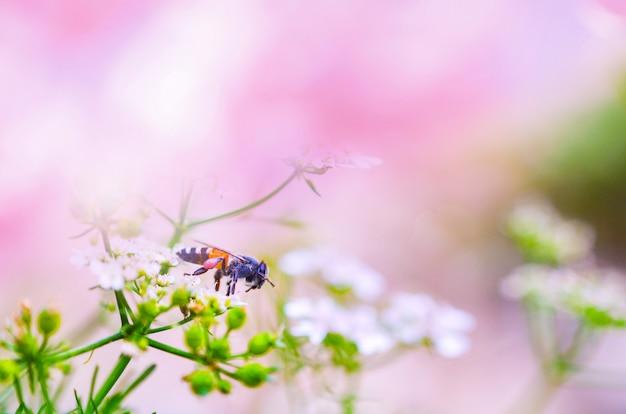 Fondo rosa naturaleza rosa y abeja en flor blanca
