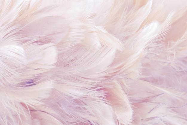Fondo rosado abstracto textura de plumas de aves y pollos