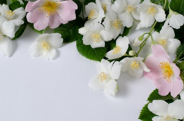 Fondo de rosas de té y flores de jazmín.