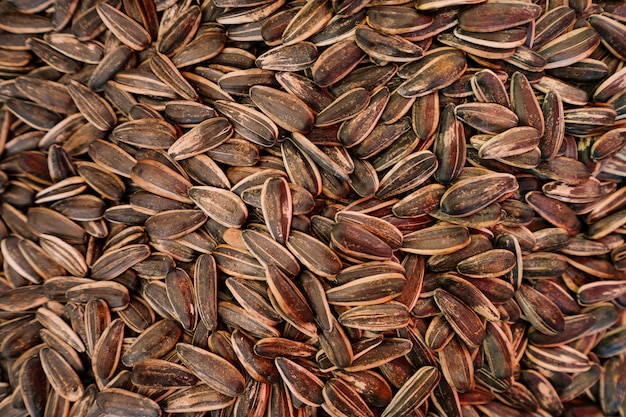 Fondo de semillas de girasol orgánico
