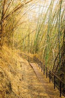 Fondo de sendero de camino de túnel de bambú
