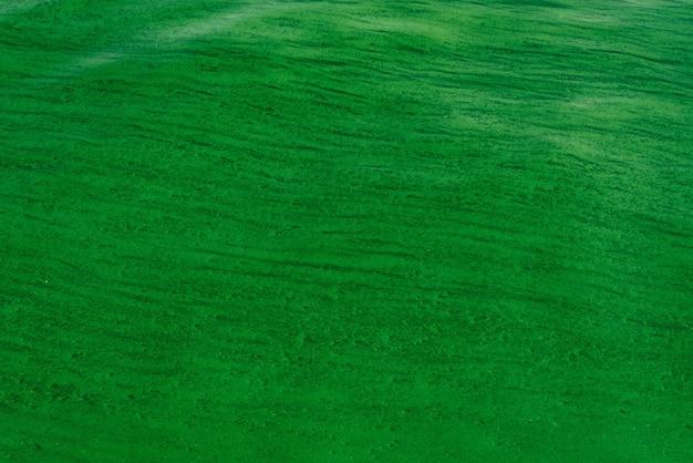 Fondo de las suaves ondas en la superficie del agua con algas verdes.