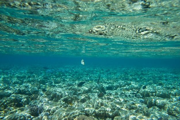 Fondo submarino del océano azul en el mar