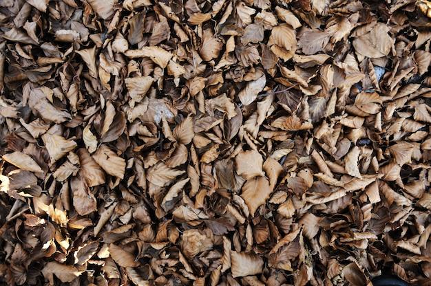Fondo del tema de otoño - gris y amarillo hoja de arce (con pasto verde)
