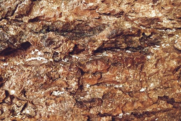 Fondo de textura de árbol viejo marrón