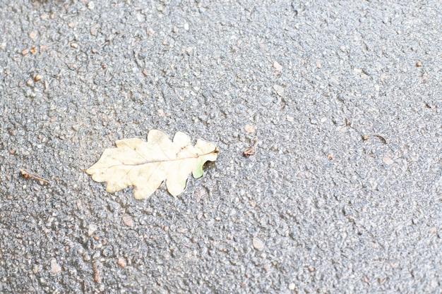 Fondo. textura de asfalto húmedo y hoja de otoño
