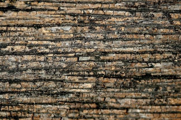 Fondo de textura de corteza de madera