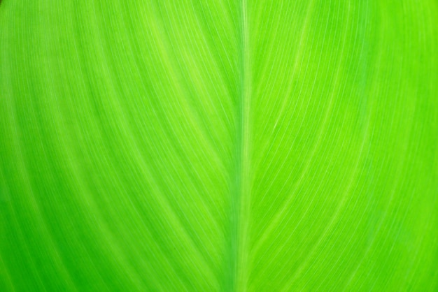 Fondo de textura de hoja verde de naturaleza