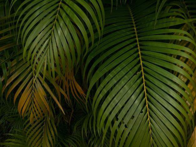 Fondo de textura de hoja verde / textura de hoja