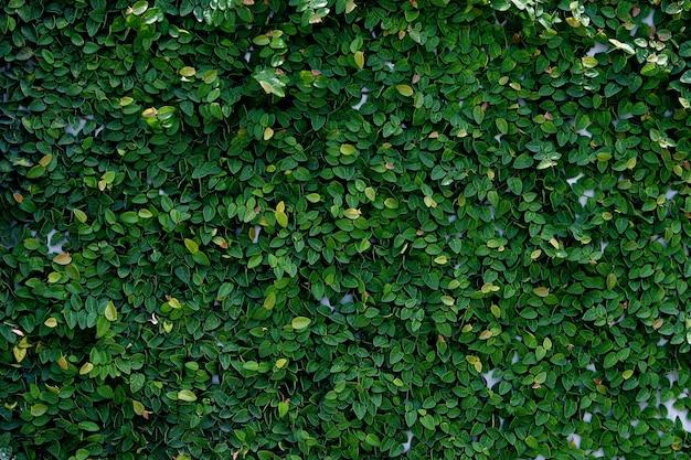 Fondo de textura de hojas