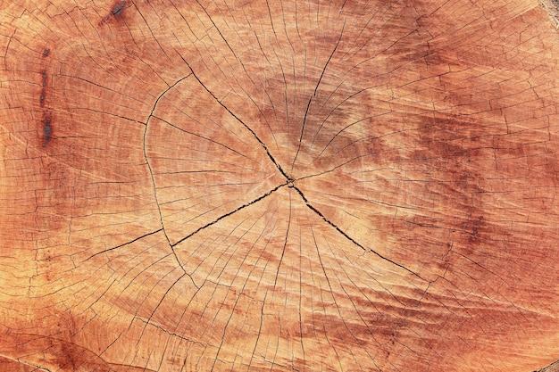 Fondo de textura de madera de árbol cortado