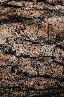 Fondo de textura de madera detallada marrón