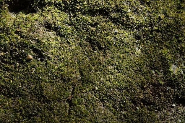 Fondo y textura de musgo verde
