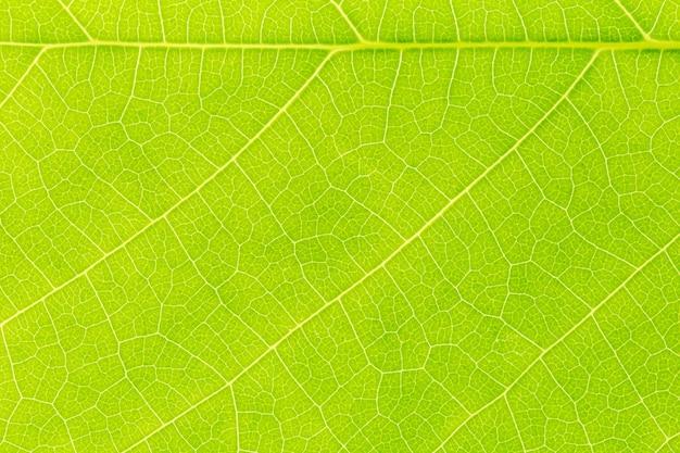 Fondo de textura de patrón de hoja verde