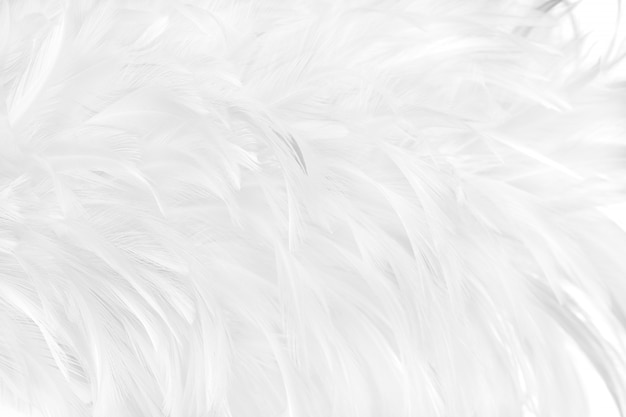 Fondo de textura de patrón de plumas de pájaro gris blanco hermoso.