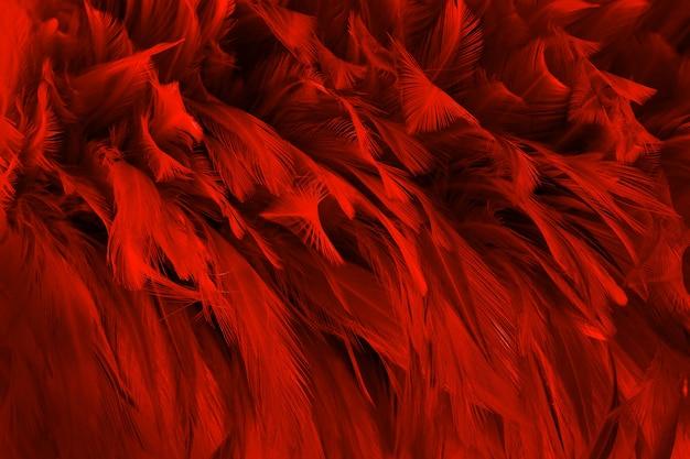 Fondo de textura de patrón de plumas de pájaro rojo oscuro hermoso.