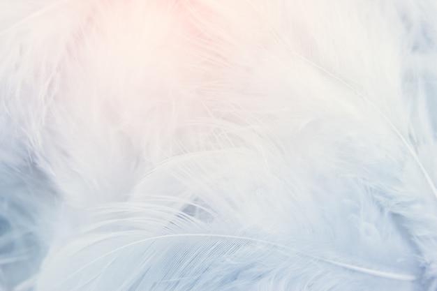 Fondo de textura de plumas blancas