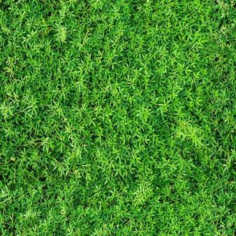 Fondo y textura transparente verde natural