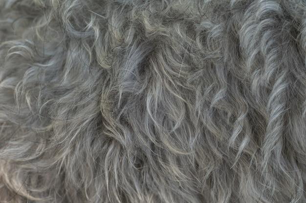 Fondo texturizado del pelo de perro del schnauzer superficial del primer