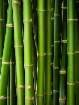 Fondo de tronco de bambú