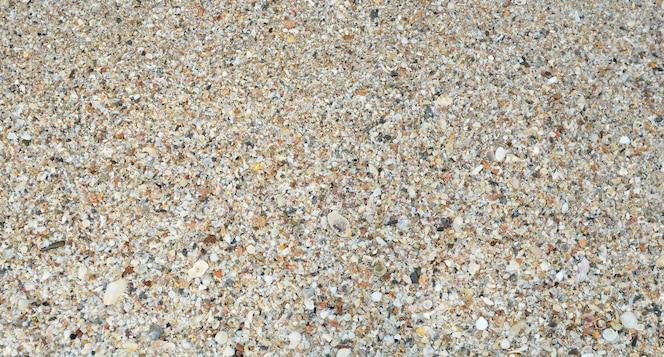 Fondo tropical con conchas de mar, coral y arena
