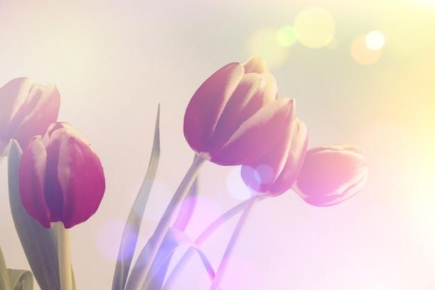 Fondo de tulipanes con efecto bokeh