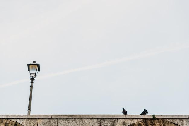 Fondo urbano de la lámpara de calle con la paloma del día.