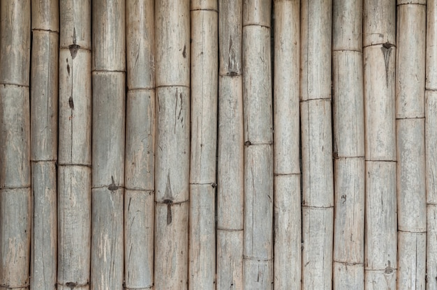 Fondo de valla de bambú, bambú viejo
