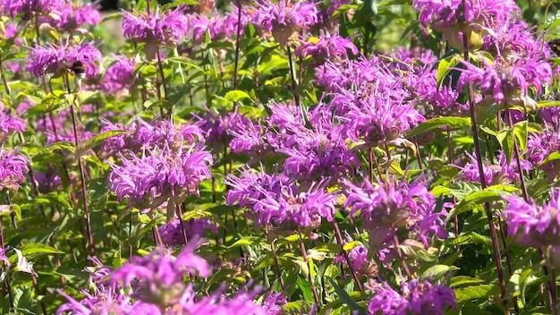 Fondo vegetativo de las plantas en flor.