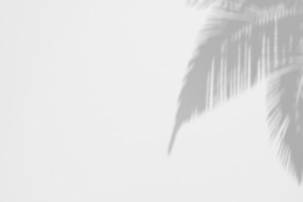 Fondo de verano de sombras de hojas de palma en una pared blanca