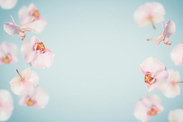 Fondo de verano tropical azul con flores de orquídeas cayendo