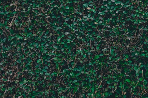 Fondo verde arbusto.