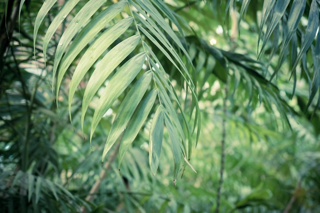 Fondo verde de hojas de palmera tropical